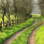 Find Your Path Through Your Novel